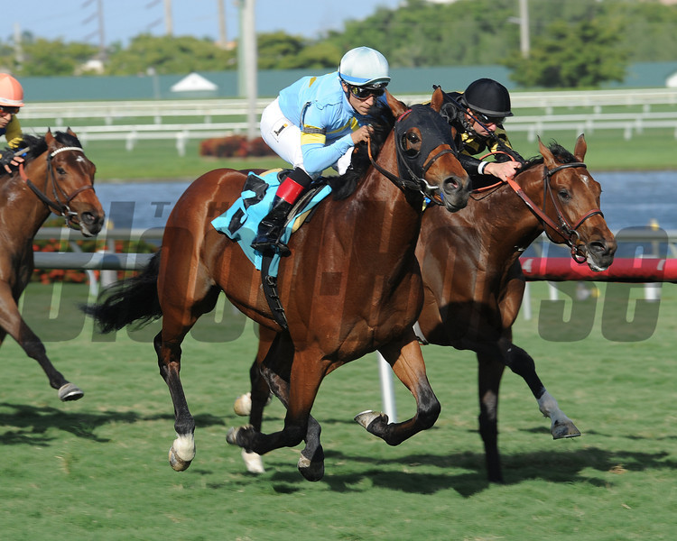 Canthelpbelieving takes the Maiden Special Weight at Gulfstream Park. <br /> Coglianese Photos