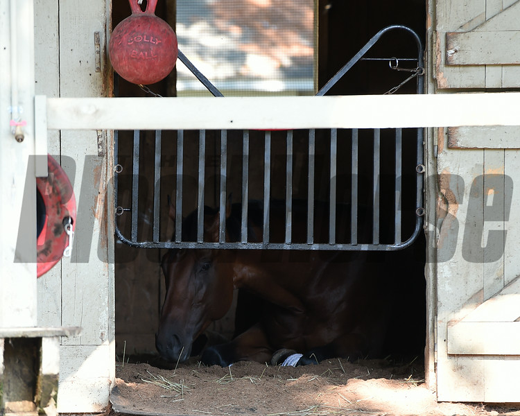Big Beast naping after racing at Saratoga. 8/24/2014<br /> Coglianese Photos/Susie Raisher