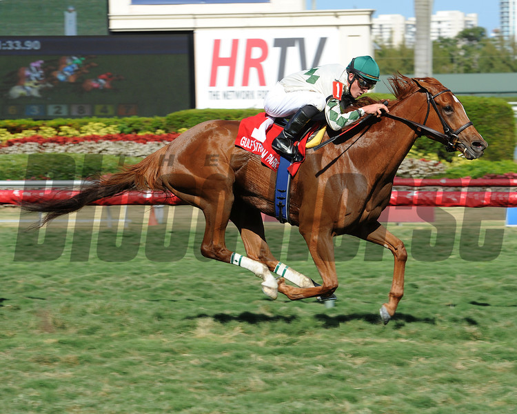 Ready Signal wins the 2014 Powder Break at Gulfstream Park.<br /> Coglianese Photos/Leslie Martin