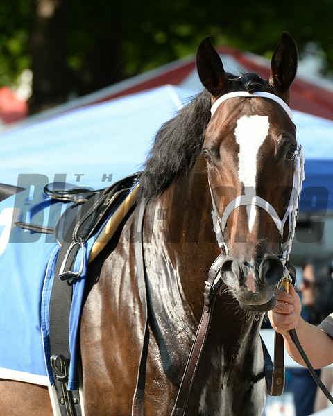 Wallyanna wins the 2014 National Museum of Racing Hall of Fame Stakes at Saratoga.<br /> Coglianese Photos