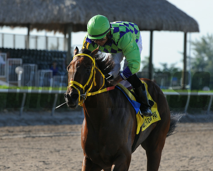 Wildcat Red wins the 2014 Quality Road Stakes at Gulfstream Park.<br /> Coglianese Photos/Kenny Martin
