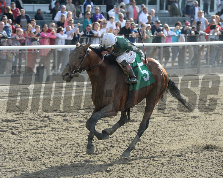 Last of 13 on the turn, favored Zivo mowed down his rivals through the Belmont Park stretch win his fifth consecutive race in the $200,000 Commentator Handicap, the highlight of New York Showcase Day.<br /> Photo by: Adam Coglianese/NYRA