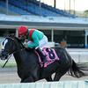 Speechify wins the Kenny Noe Jr. Stakes 11/16/2014.<br /> Coglianese Photos/Natalie Fawkes