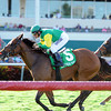 Believe In Charlie wins the Ladies Turf Sprint Stakes at Gulfstream Park.<br /> Coglianese Photos