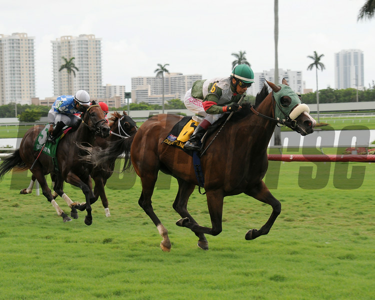 Madame Giry wins the 2014 Bob Umphrey Turf Sprint Stakes at Gulfstream Park. <br /> Coglianese Photos/Natalie Fawkes