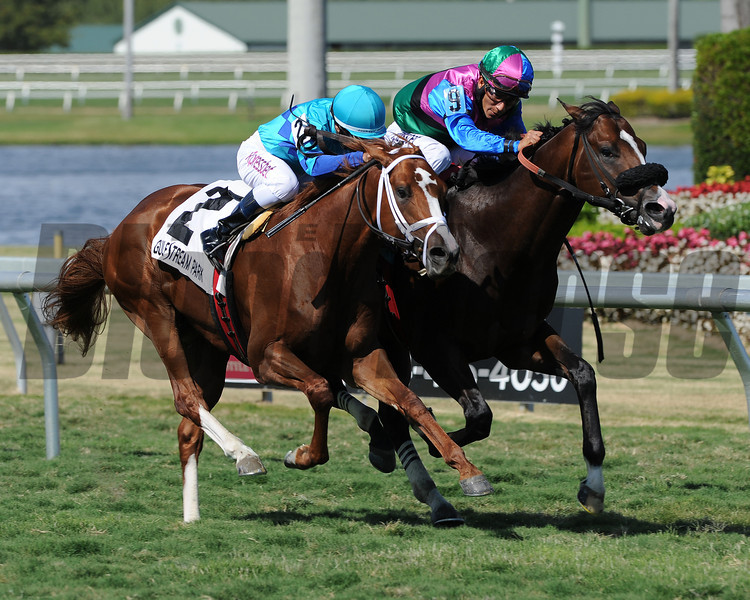 Yes I'm Lucky wins the 2014 Mr. Light Stakes at Gulfstream Park.<br /> Coglianese Photos/Lauren King