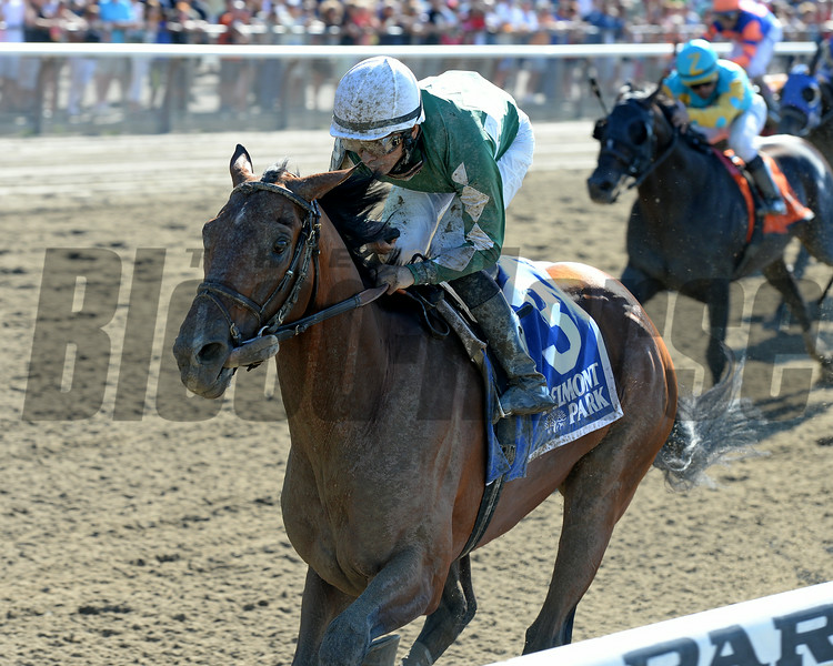 Zivo wins the 2014 Suburban at Belmont Park.<br /> Coglianese Photos/Chelsea Durand