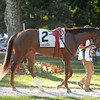 Miss Frost wins the 2014 Riskaverse at Saratoga.<br /> Coglianese Photos