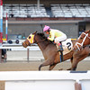 Lion D N A wins the 2014 Interborough Stakes.<br /> Coglianese Photos