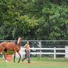 Xcellence (FR) July 3, 2014<br /> Coglianese Photos/Susie Raisher