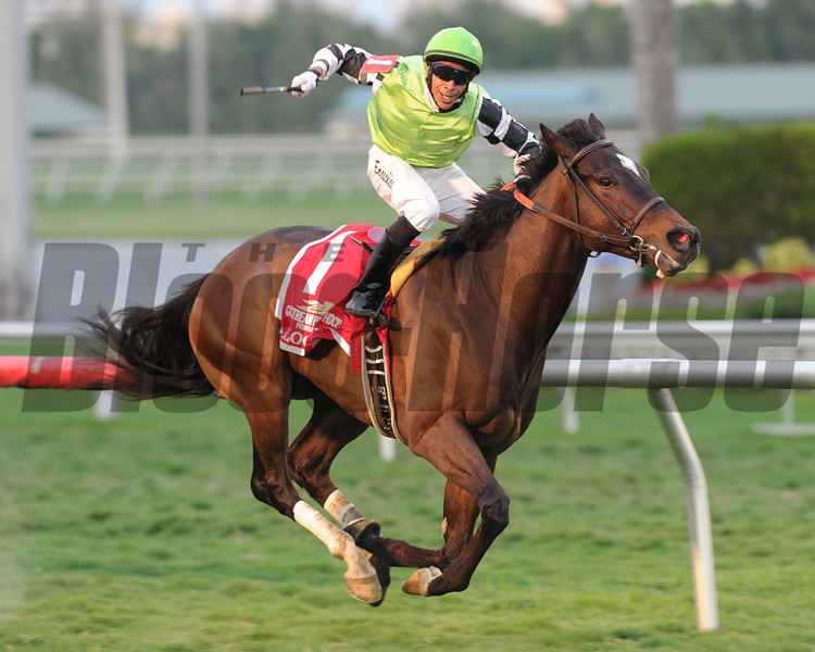 Locthe wins the Gulfstream Park Turf Handicap 2/9/2014.<br /> Coglianese Photos