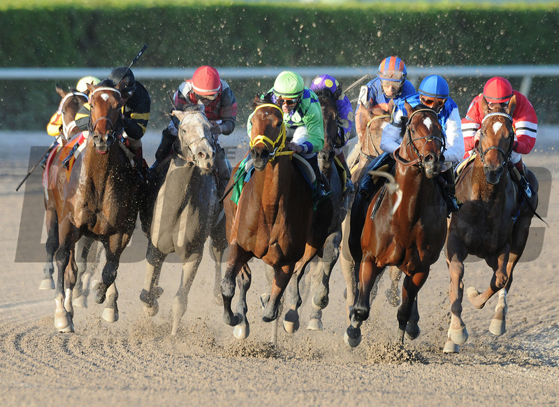 Wildcat Red wins the 2014 Hutcheson Stakes at Gulfstream Park. <br /> Coglianese Photos/Shannon Spies