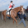 Leave the Light On wins the 2014 Remsen at Aqueduct.<br /> Coglianese Photos