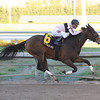 Devil's Cave wins the Sabin Stakes 2/16/2014.<br /> Coglianese Photos/Leslie Martin