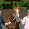 Wise Dan at Saratoga on August 28, 2014.<br /> Coglianese Photos