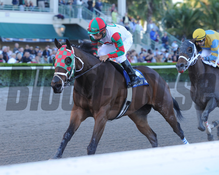 Ribo Bobo wins the 2014 Florida Sunshine Millions Sprint.<br /> Coglianese Photos/Leslie Martin