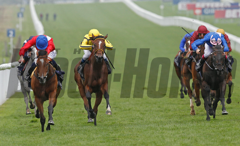 The QIPCO Falmouth Stakes. Newmarket 11/7/14.<br /> Integral ridden by Ryan Moore (red&blue) wins fron Rizeena (yellow) and Peace Burg (blue)<br /> Trevor Jones Photo