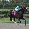 Speechify wins the Kenny Noe Jr. Stakes 11/16/2014.<br /> Coglianese Photos/Leslie Martin