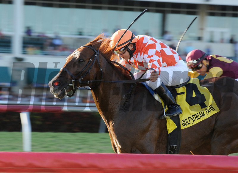 Wicked Tune wins the 2014 Gulfstream Park Turf Sprint.<br /> Coglianese Photos/Kenny Martin