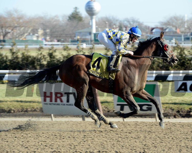 Salutos Amigos wins the 2014 Gravesend Handicap. <br /> Coglianese Photos