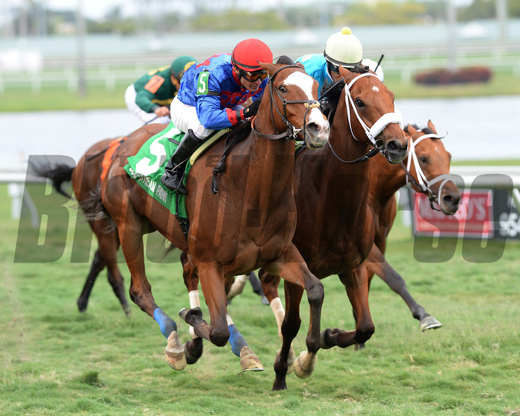 Hey Leroy wins the 2014 Appleton at Gulfstream Park.<br /> Coglianese Photos
