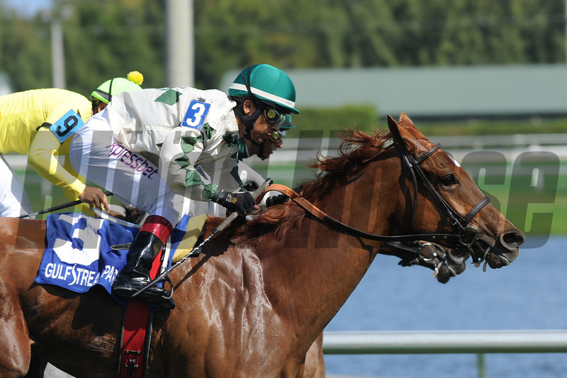 Ready Signal wins the Ten Palms Stakes at Gulfstream Park on February 23, 2014.<br /> Coglianese Photo