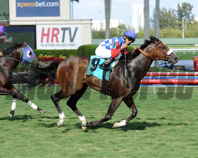 Stormy Rush wins the 2014 Lincoln Stakes at Gulfstream Park.<br /> Coglianese Photos/Lauren King
