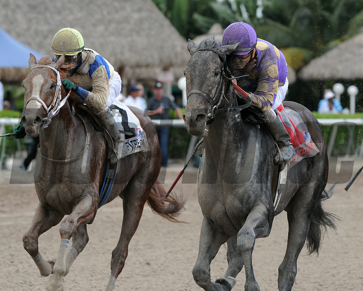 C. Zee wins the 2014 Cherokee Run Stakes at Gulfstream Park.<br /> Coglianese Photos/Kenny Martin