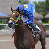 Dekabrist wins the 2014 Kodiak Island Stakes at Gulfstream Park.<br /> Coglianese Photos/Kenny Martin