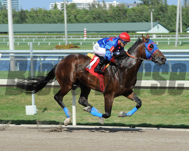 Social Inclusion defeats Honor Code and wins an allowance race at Gulfstream Park on March 12, 2014. Photo credit: Coglianese Photos/Leslie Martin.