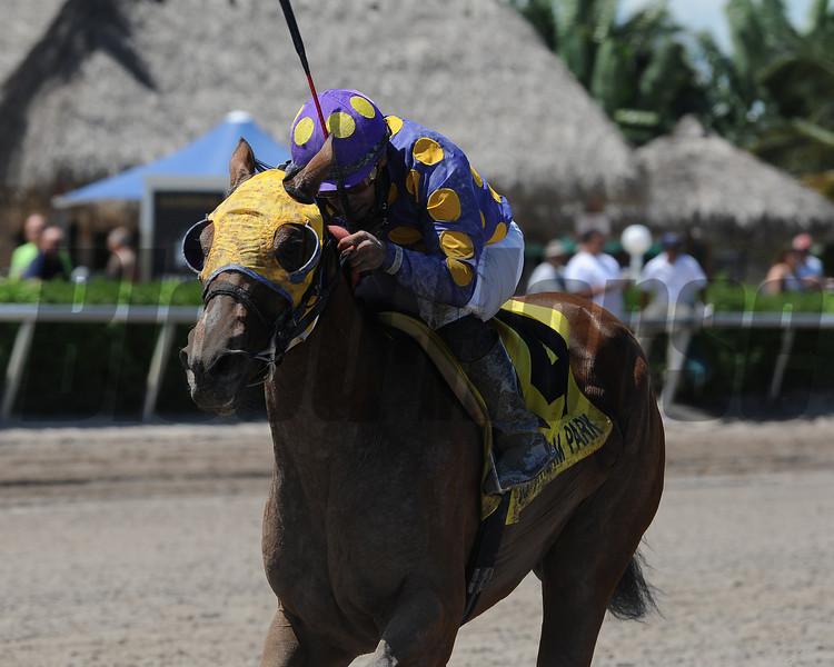 Leap Year Luck wins the 2014 Florida Stallion Desert Vixen Stakes at Gulfstream Park. <br /> Coglianese Photos/Kenny Martin