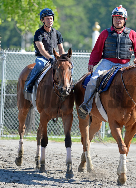 Caption: Beholder with Gary Stevens after work<br /> Belmont and undercard works on June 2, 2014, at Belmont Park in Elmont, N.Y.<br /> MonOrigs1   image818<br /> Photo by Anne M. Eberhardt