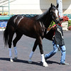 Kentucky Derby probable Honor Code preps at Gulfstream Park March 3, 2014.<br /> Coglianese Photos