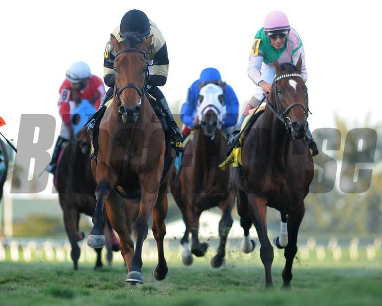 Twilight Eclipse wins the 2014 Mac Diarmida Stakes at Gulfstream Park. <br /> Coglianese Photos/Leslie Martin