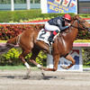 Ragtime wins race 5 at Gulfstream Park. <br /> Coglianese Photo