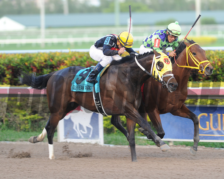 General a Rod wins the 2014 Gulfstream Park Derby.<br /> Coglianese Photos/Lauren King