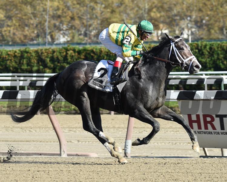Blofeld wins the Nashua Stakes Nov. 2, 2014.<br /> Coglianese Photos