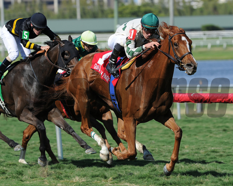 Ready Signal is victorious in the Powder Break Stakes at Gulfstream Park.       <br /> Photo by: Coglianese Photo