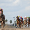 Groupie Doll wins the Grade III Hurricane Bertie Stakes at Gulfstream Park on February 9, 2014.<br /> Coglianese Photo