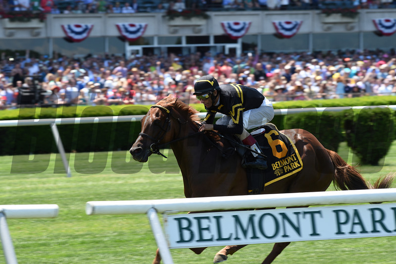 Undrafted wins the 2014 Jaipur Stakes at Belmont Park. <br /> Coglianese Photos