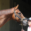 Imagining at Belmont Park 6/1/2014<br /> Coglianese Photos/Susie Raisher