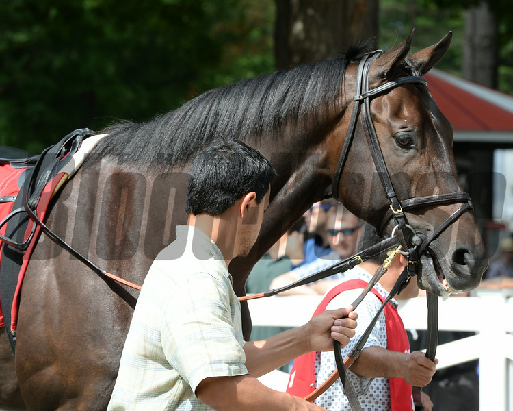 Startup Nation wins the 2014 With Anticipation Stakes at Saratoga.<br /> Coglianese Photos