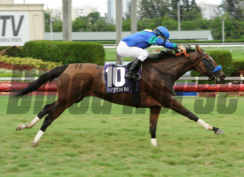 Angelica Zapata wins the 2014 Soaring Softly Stakes at Gulfstream Park.<br /> Coglianese Photos/Leslie Martin