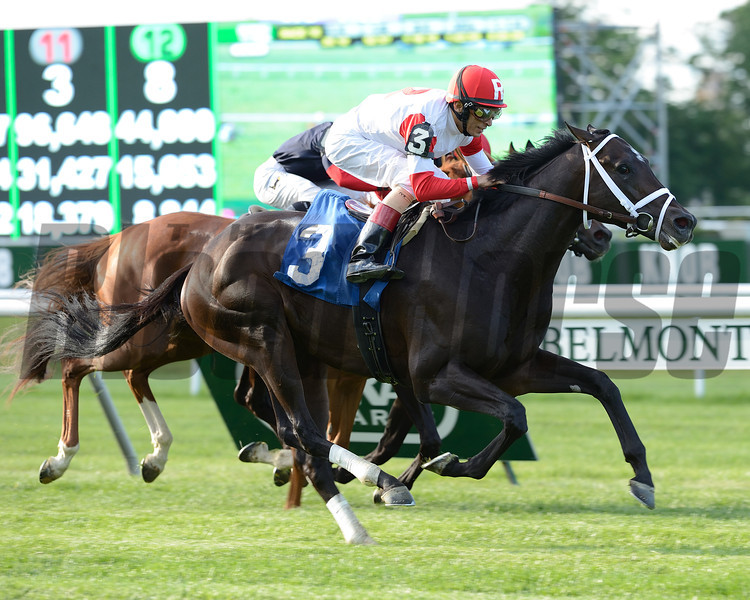 Charming Kitten wins the 2014 Belmont Gold Cup Invitational.<br /> Coglianese Photos