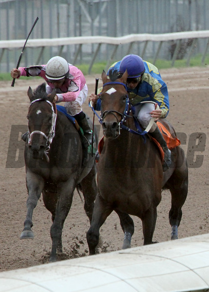 8/2/2014  -  Palmy Bay with jockey Don Simington (blue cap) passes Marv In Lafayette ridden by Richard Eramia then goes on to capture the 36th running of the Louisiana Cup Sprint at Louisiana Downs.   Hodges Photography / Lynn Roberts