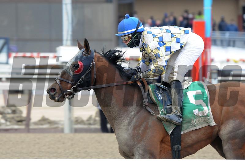 Salutos Amigos wins the 2015 Toboggan Stakes at Aqueduct.<br /> Coglianese Photos/Adam Mooshian
