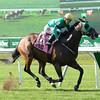 King Kreesa wins the 2015 Forbidden Apple Stakes.<br /> Coglianese Photos/Chelsea Durand