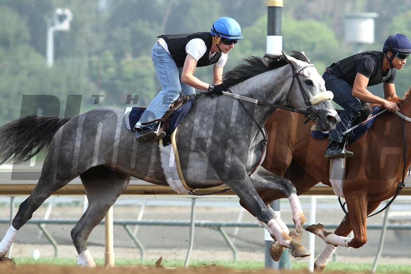 NASHOBA'S GOLD being worked by jockey Joe Talamo at Santa Anita 05.30.15. Photo by Helen Solomon