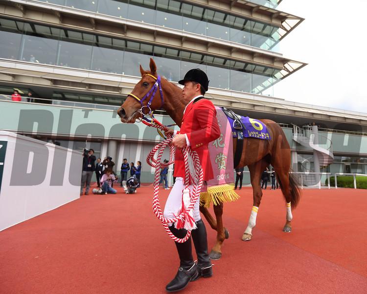 Let's Go Donki wins the 2015 Oka Sho (Japanese Two Thousand Guineas).<br /> Masakazu Takahashi