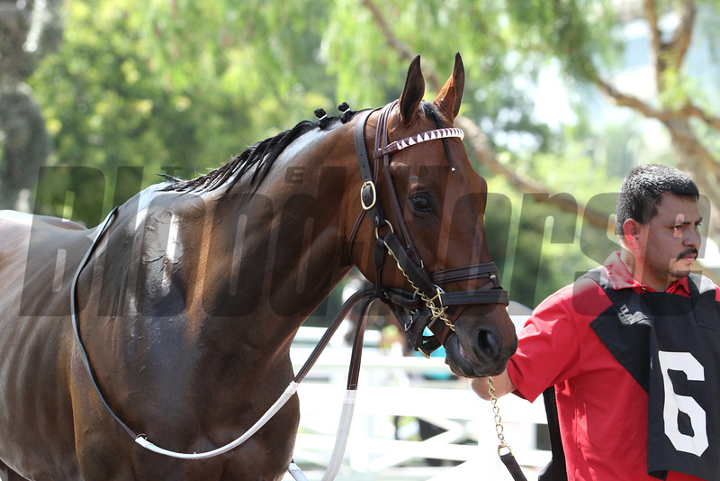 BLUE TONE for the G2 Californian Stakes at Santa Anita 05.30.15. Photo by Helen Solomon
